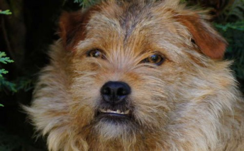 Mick's Hund