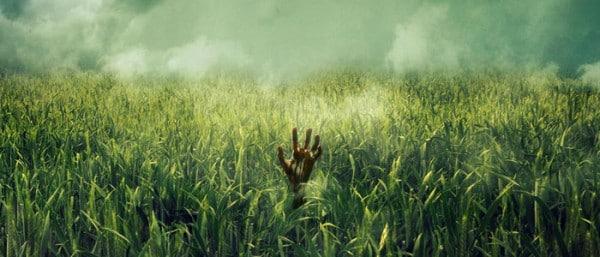 im hohen grass in-the-tall-grass-